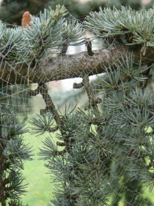 An autumnal web