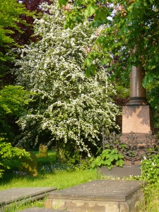 Hatfield Churchyard, May 2012. I bet they have bells.