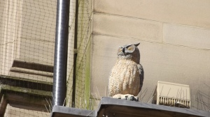 Another owl: Leeds. The place is full of them.