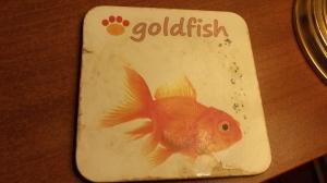 Coaster Fish loves rain