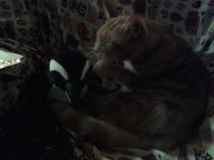 Cat befriends penguin: film at 11!