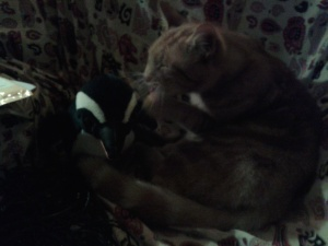 Cat befriends penguin: film at 11!