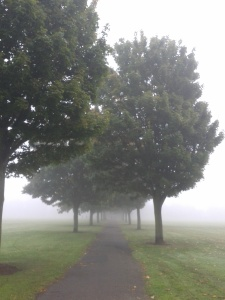 Misty trees: Doncaster, 2015