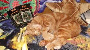 Cat with Carpe
