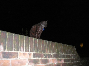 Cat on a wall, hey bop shoo