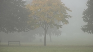 Foggy Donny, autumn 2015