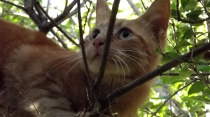Al, close up & personal (& in a tree)