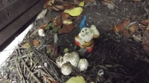 This is not going to end well, the garden gnome thought, with a smile